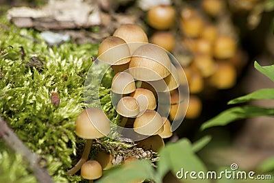 Winter estimates of location pokrtom moss growing on a tree.