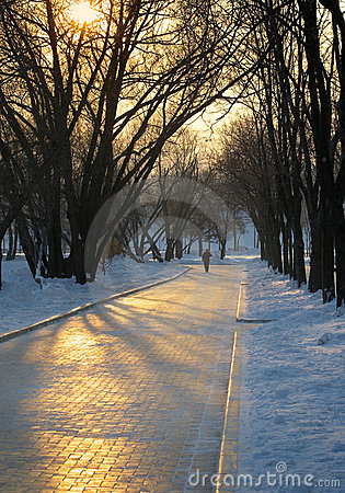 Winter evening in park