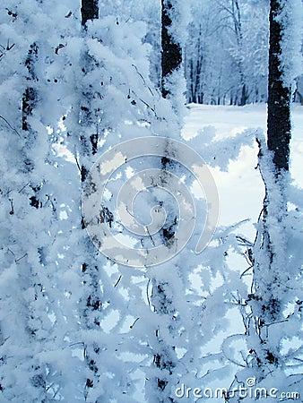 Winter fantasy. Fence