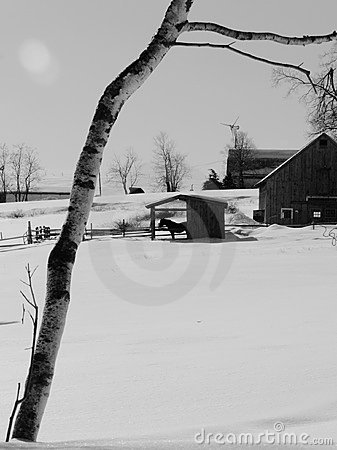Winter: farm buildings with horse in snow