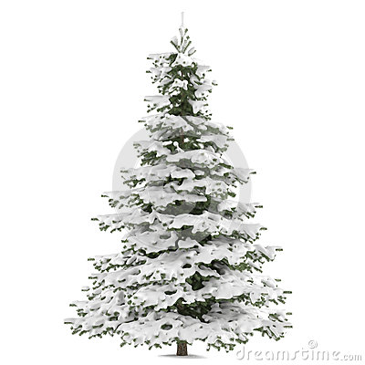 Winter fir-tree on snow isolated