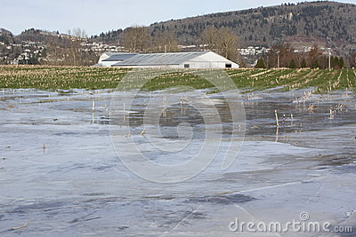Winter Flooded Farm Land