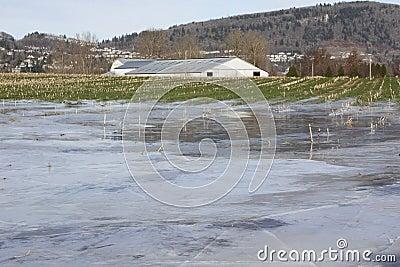 Winter Flooded Farm Land