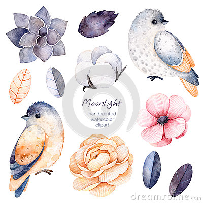 Free Winter Floral Collection With 11 Watercolor Elements. Royalty Free Stock Photo - 78636195