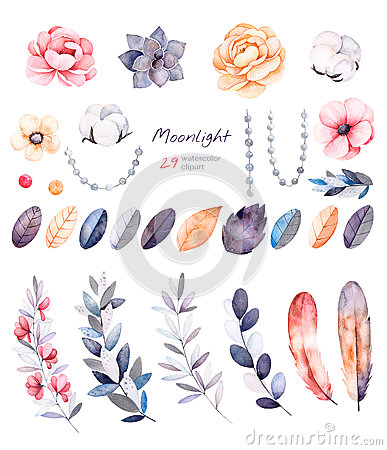 Free Winter Floral Collection With 29 Watercolor Elements. Stock Photography - 78636742