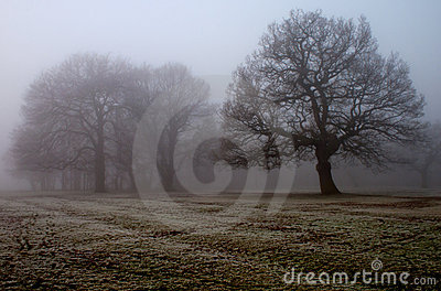 Winter fog in local park