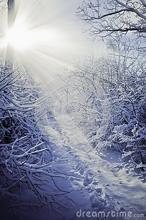 Free Winter Forest Royalty Free Stock Photo - 27841525