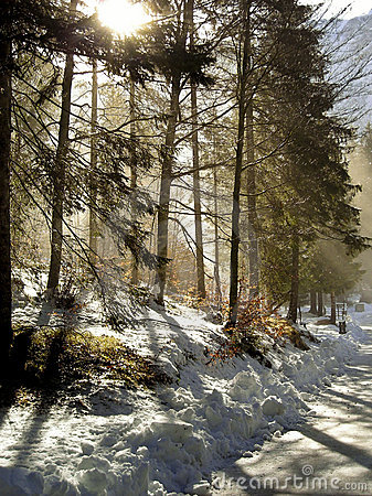 Free Winter Forest Royalty Free Stock Photography - 4112777
