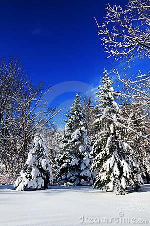 Free Winter Forest Royalty Free Stock Images - 4350599