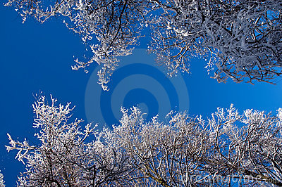 Winter forest against the blue sky