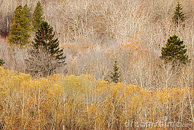 Winter forest in edmonton
