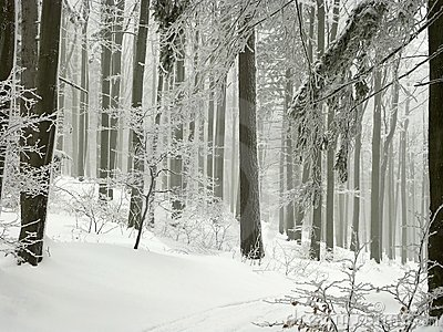 winter forest with frost covered trees