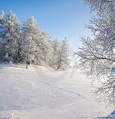 Winter forest and lake