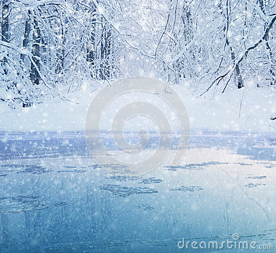Free Winter Forest Lake Royalty Free Stock Photo - 33943995