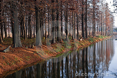 Winter forest near the river