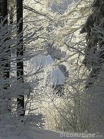 winter forest path in morning sun