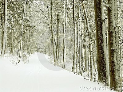 Winter forest path, snow covered trees