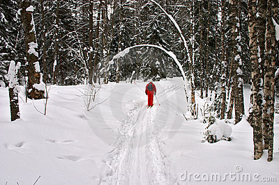 Winter forest. Red skier