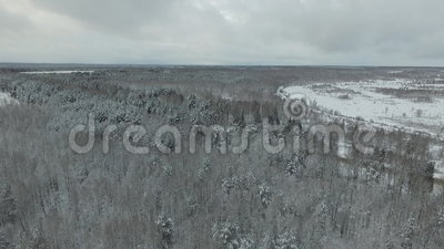 Winter forest. Russia, Moscow suburbs stock video footage
