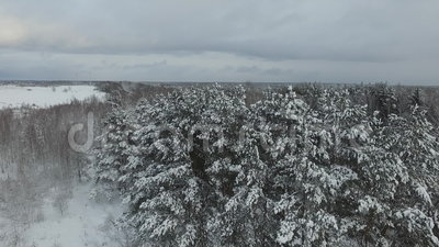 Winter forest. Russia, Moscow suburbs stock video