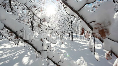 Winter forest scenery. With trees and lot of snow stock footage