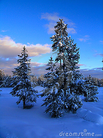 Free Winter Forest Sunset Royalty Free Stock Photo - 1207605