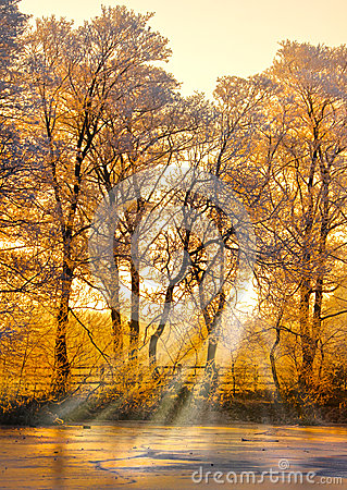Free Winter Forest Sunset Royalty Free Stock Photos - 37907358