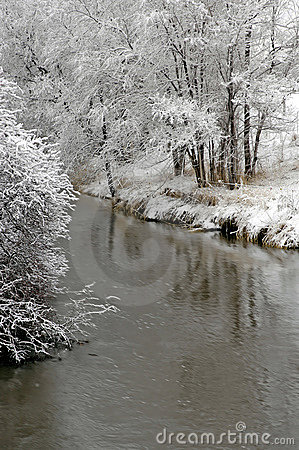 Winter Forrest by River
