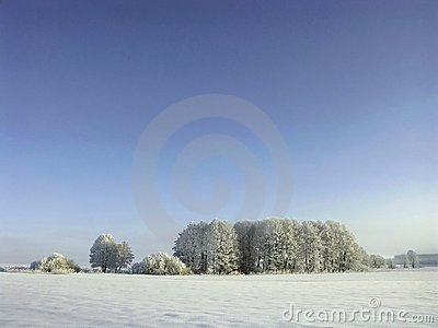 winter frost covered trees, snowy landscape