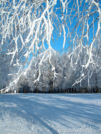 Free Winter Hoar-frost. Stock Images - 295134