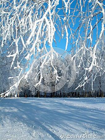 Winter hoar-frost.