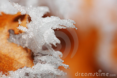Winter ice leaf