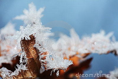 Winter ice leaf
