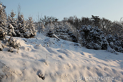 Winter idyll in nature