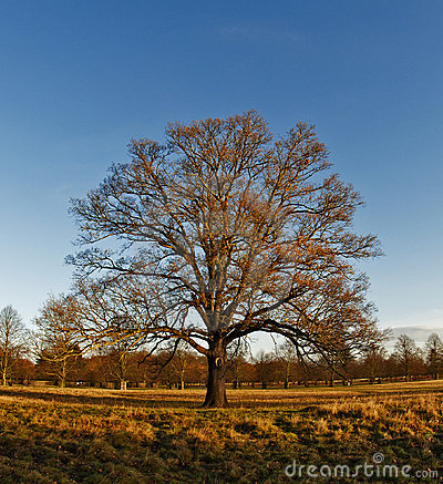 Free Winter In Bushy Park Royalty Free Stock Photography - 22517587