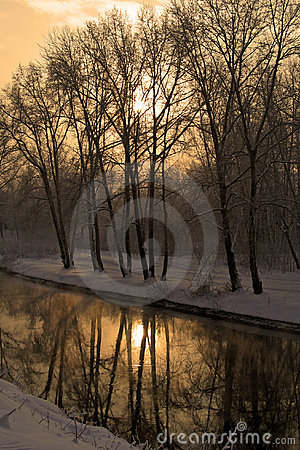 Free Winter In Gold Stock Photo - 319150