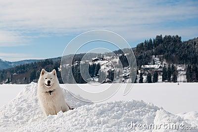 On a winter lake