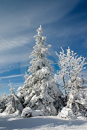 Winter land and trees