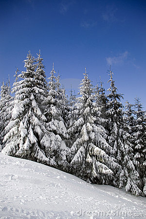 Free Winter Landscape Royalty Free Stock Images - 1936139