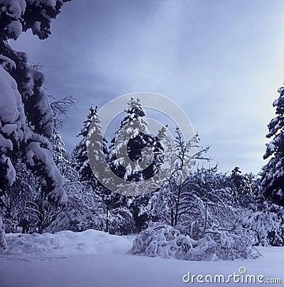 Winter landscape.