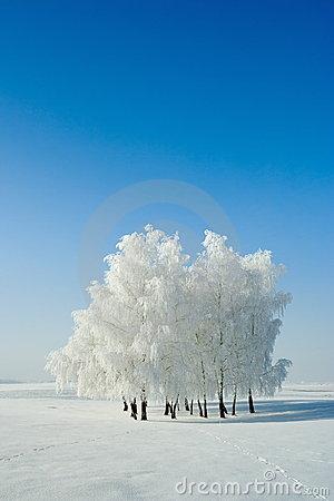 Free Winter Landscape And Trees Stock Photo - 3996940