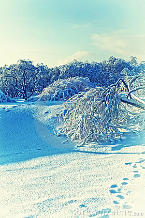 Winter Landscape  Beautiful Fluffy Snow Stock Photography - Image: 18387962