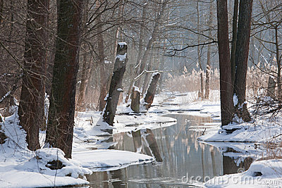 Winter landscape of flowing river in sunny day