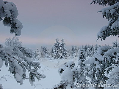 Winter landscape by forest
