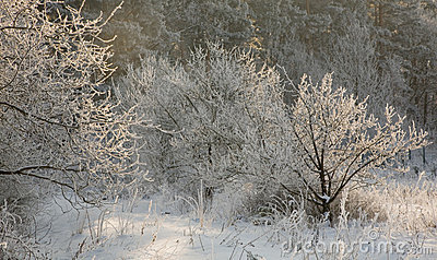 Winter landscape with frosted tree