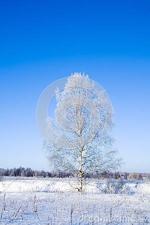 Winter landscape of frosty tree