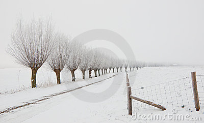 Winter landscape with a row of pollard willows