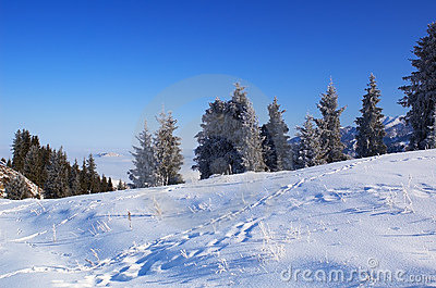Winter landscape and traces on snow