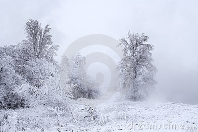 Winter landscape - trees covered with snow