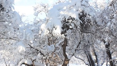 Winter lanscape. Snow on trees and birds